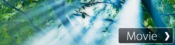 【癒し系】自然音 静かな森 Quiet Forest Sound Meditation