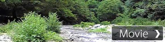 【癒し系】自然音 せせらぎ 長め Babbling Brook Sound Meditation