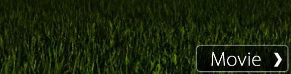 【癒し系】自然音 田んぼのカエル Croaking frog in rice paddy at night