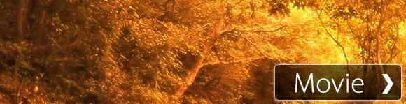 【癒し系】自然音 ひぐらし 真夏の雨上がりにて Japanese cicada after the rain
